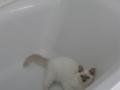 Isie baignoire.JPG