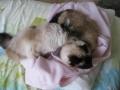 jardin et chat mai 2009 011