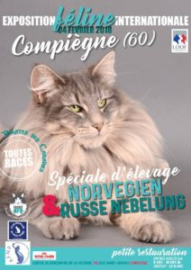 Exposition feline internationale compiegne
